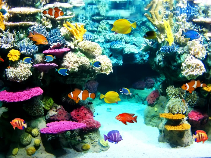 Peces bonitos para acuario ideas de disenos for Red para peces de acuario