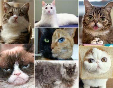 Gatos famosos de Internet