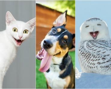 Imágenes graciosas animales