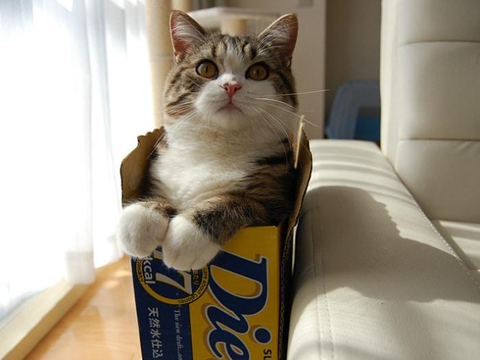 Maru gato