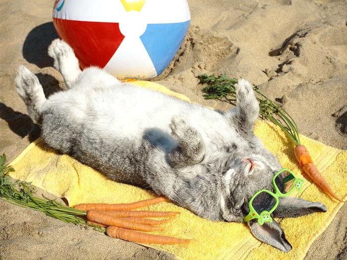 Refrescar conejo verano