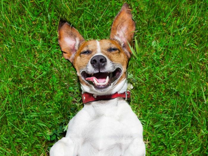 videos perros graciosos