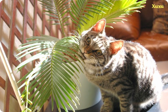 Plantas t xicas para los gatos todo mascotas for Plantas toxicas gatos