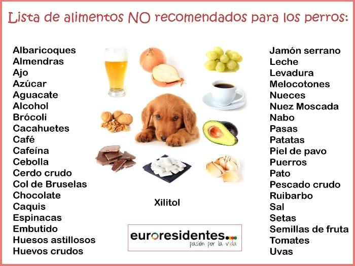 Alimentos t xicos y perjudiciales para los perros - Alimentos recomendados para perros ...