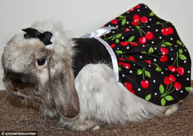 conejos disfrazados
