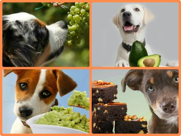 Alimentos perjudiciales para los perros todo mascotas - Todo para nuestras mascotas ...
