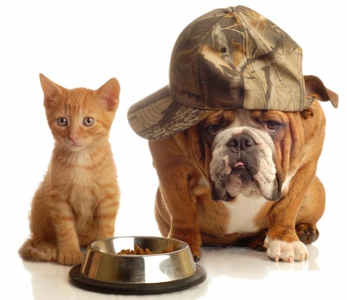Comida perrps y gatos