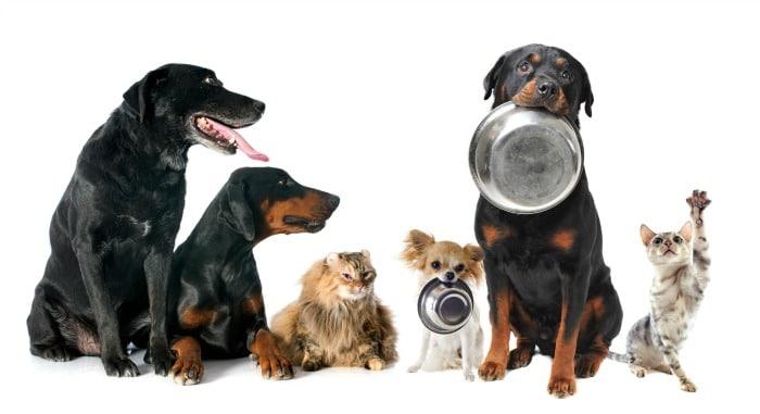 Perros y gatos comida
