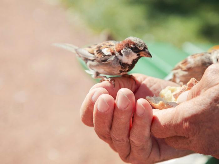 Curar un pájaro herido