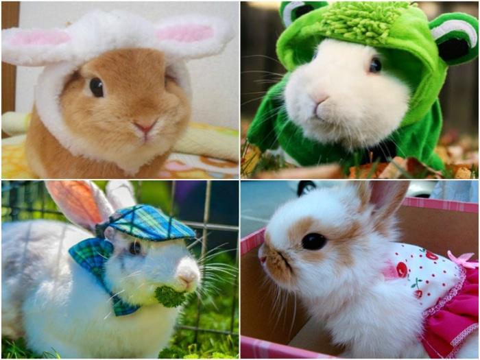 conejos mejores disfraces