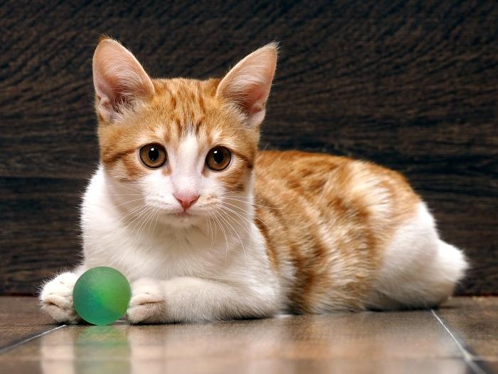 Estos gatos se creen que son perros - Fundas para unas de gato ...