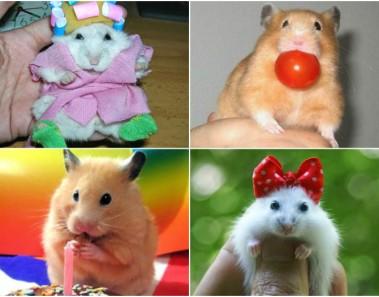 Hamsters graciosos