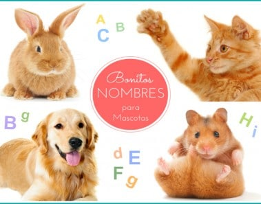 Nombres para mascotas
