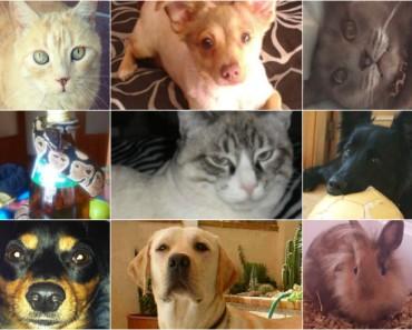 Vuestras Mascotas