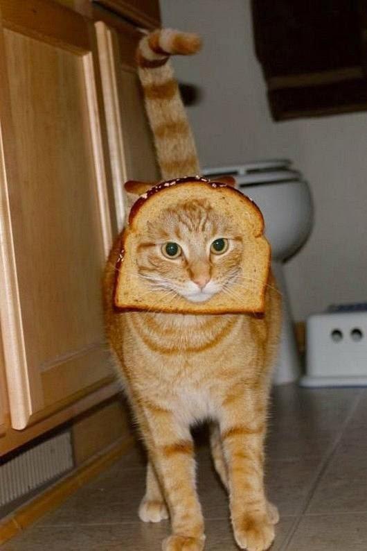 Mascotas Con Pan En La Cabeza Todo Mascotas