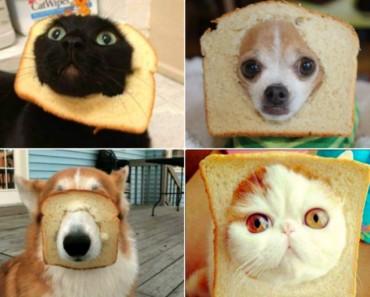 Mascotas con pan