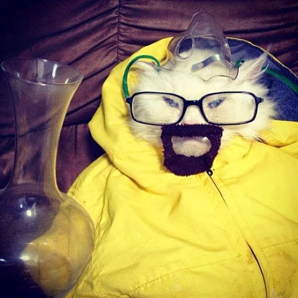 gatos con disfraces