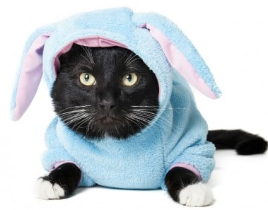Gatos disfrazados carnaval