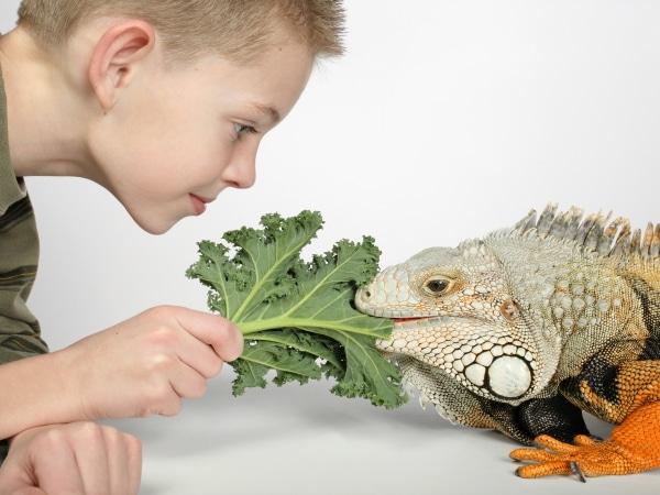 Resultado de imagen de iguanas comiendo