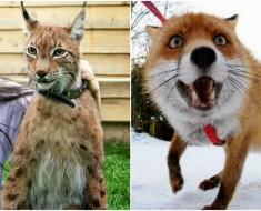 Mascotas inusuales y raras