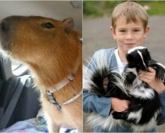 Mascotas inusuales