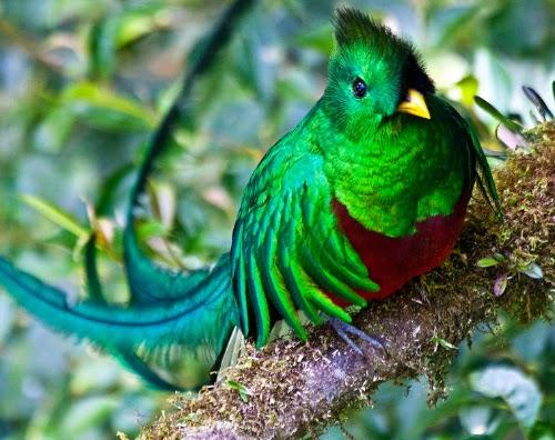 Las aves más raras del planeta - Todo mascotas