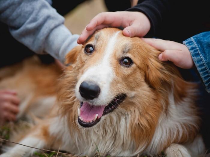 Beneficios tener perros los niños