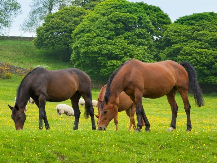 Bonitos caballos comiendo