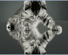 gato-espejo