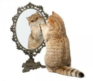 Gato se mira al espejo