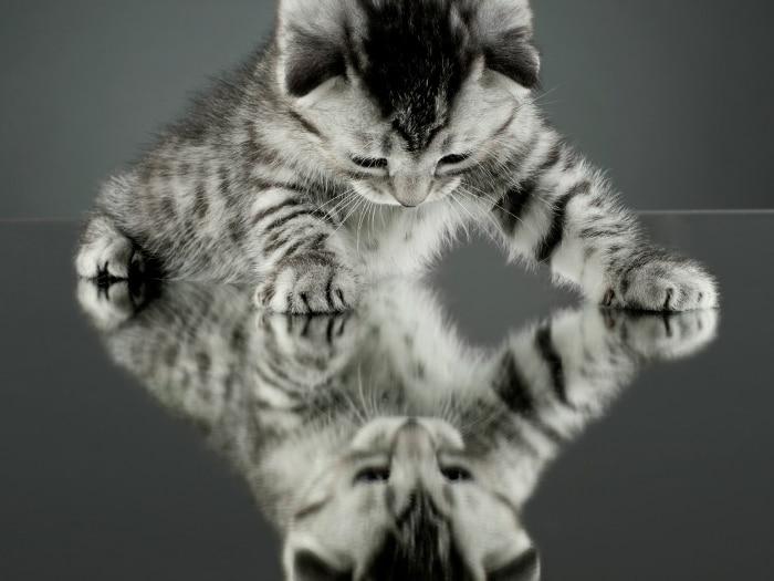 Gato mira al espejo
