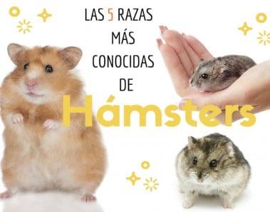 5 razas más conocidas de hamsters