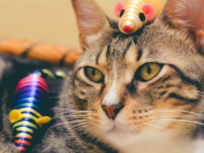 ratón de juguete para gatos