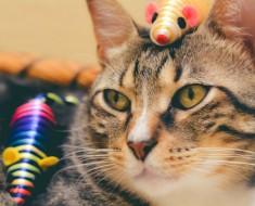 Ratón para gatos de cuerda