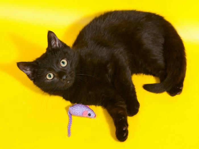 Hacer ratón para gatos juguete