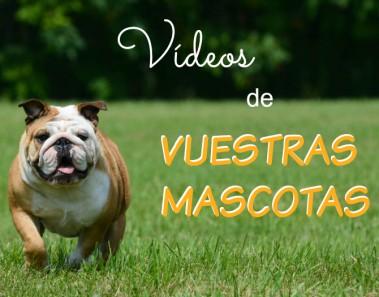 Vídeos de vuestras mascotas