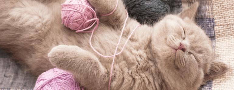 DIA-INTERNACIONAL-GATO-todomascotas