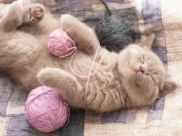 dia de los gatos 20 febrero
