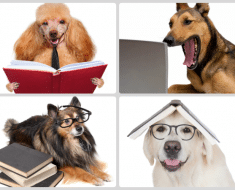 Perros-inteligentes-todo-mascotas
