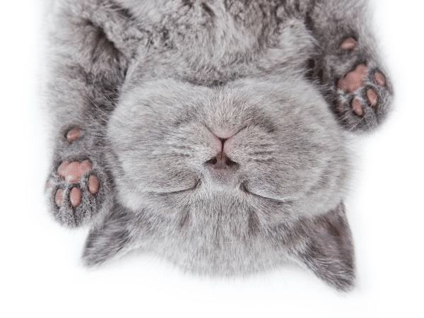 dia del gato 20 de febrero