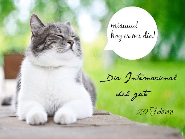 20 febrero dia de los gatos