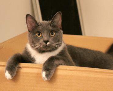 gato-caja-todomascotas