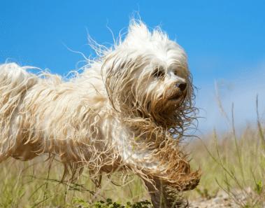 Transforman el aspecto de perros vagabundos