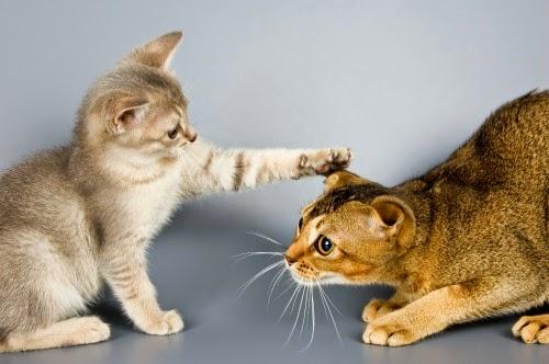 Resultado de imagen para gato conociendo otro gato