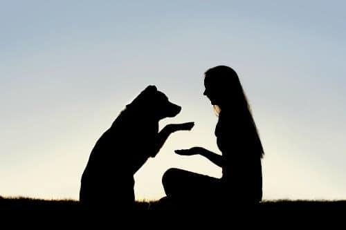 28 mayo dia perro sin raza