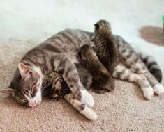 gata-mikey-adopta-gatitos