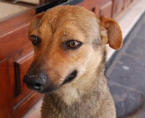 día perro sin raza 28 mayo