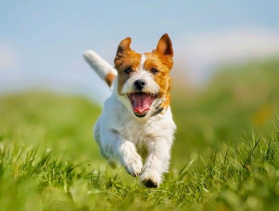 Tips para mantener a tu perro saludable