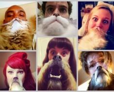 gatos-perros-barba