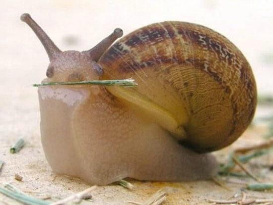 caracol-pequeno-gracioso-tierno-bonito